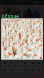 стоит корова и обилие гусей находящиеся на ферме