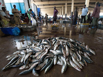 Image result for Customs destroys N20m smuggled Fish, Soap in Borno