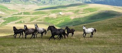 Τα άγρια άλογα του Ολύμπου - Απόγονοι του Βουκεφάλα