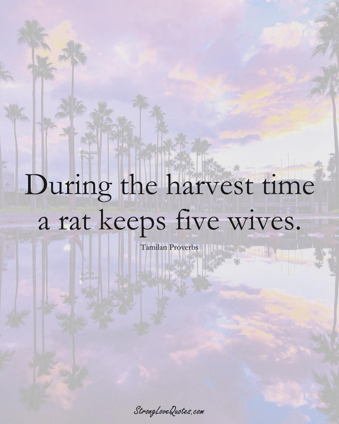 During the harvest time a rat keeps five wives. (Tamilan Sayings);  #aVarietyofCulturesSayings