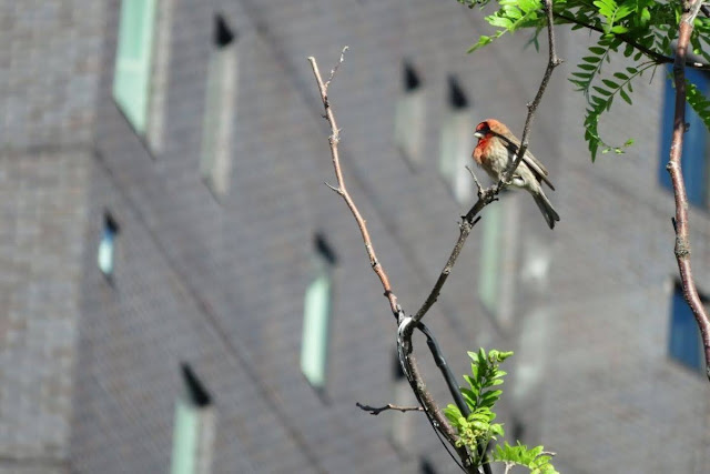 Bird on the High Line Trail in Manhattan