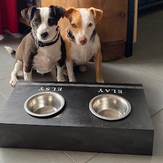 deux chiens devant leur bar à chien