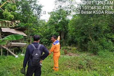 Dua Ekor Beruang Madu Masuk Permukiman Warga di Siak, BBKSDA Riau Turunkan Petugas