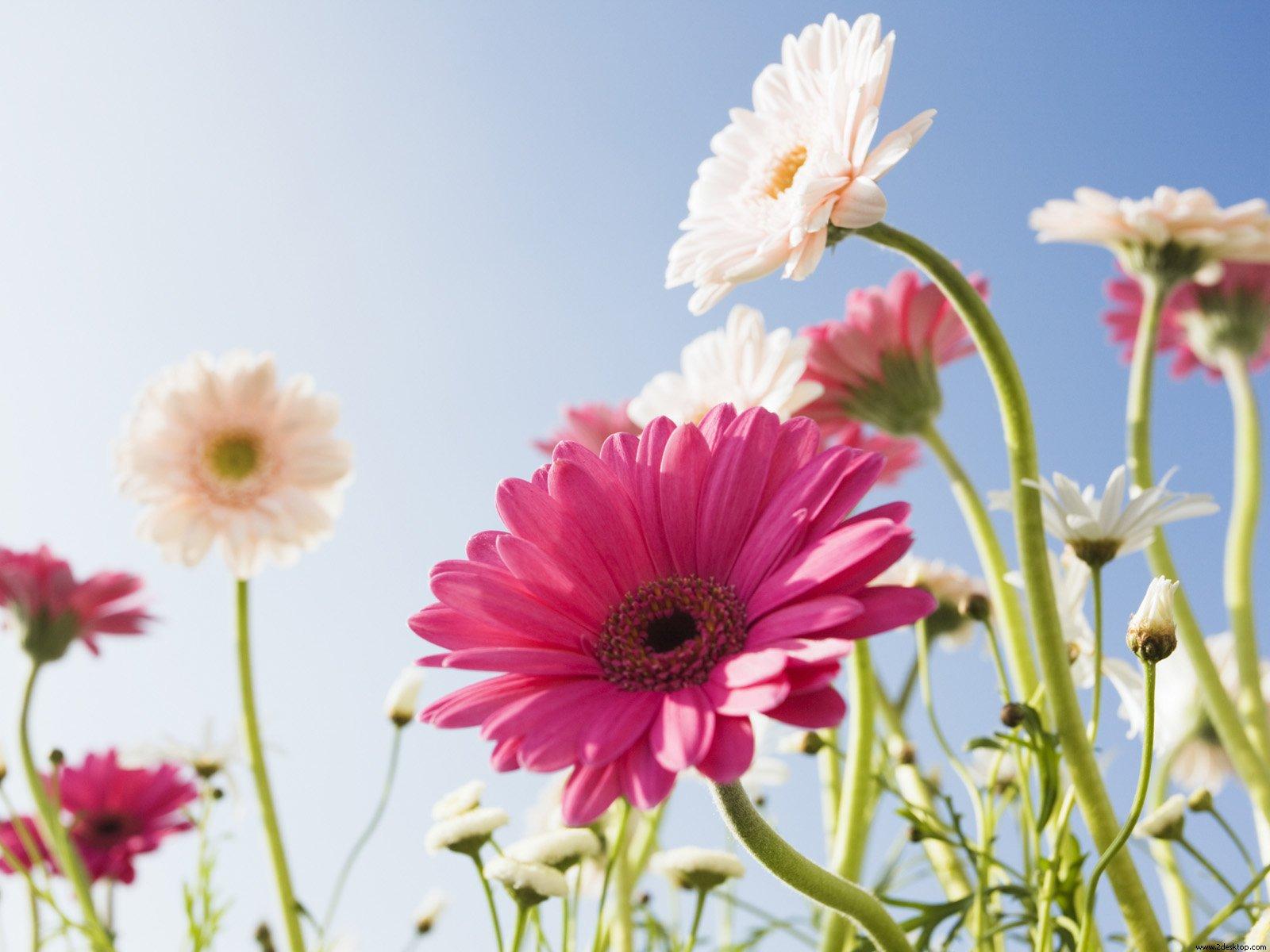 Fondos De Pantalla De Flores Hermosas Para Fondo Celular: Imagenes Para Celular Animadas Con Movimiento
