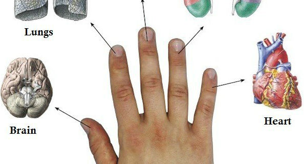 SO HOW TO HEAL THE DISEASE IN 5 MINUTES WITH THE RELATIONSHIP OF 2 BODY ORGANS EVERY FINGER
