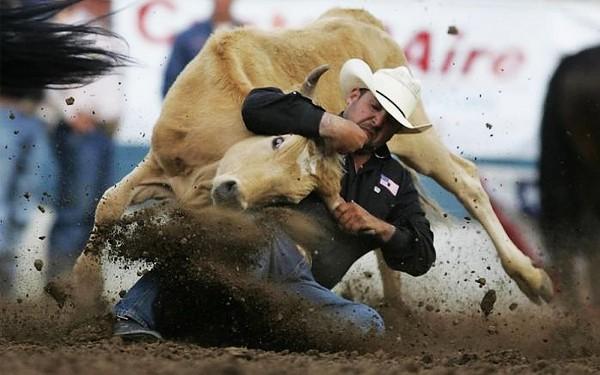 Domar o touro
