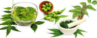 नींम हर्बल एक औषधि रखे स्वस्थ दीर्घायु, Neem Benefits in Hindi, नीम के फायदे, neem ke fayde, neem ke labh, neem ke gun, नीम के  औषधीय गुण, नीम के लाभ, neem ayurvedic aushadhi, नीम आयुर्वेदिक औषधि, नीम गुणकारी, Neem ayurveda medicine , neem aushadhi, Neem Herbal , Margosa