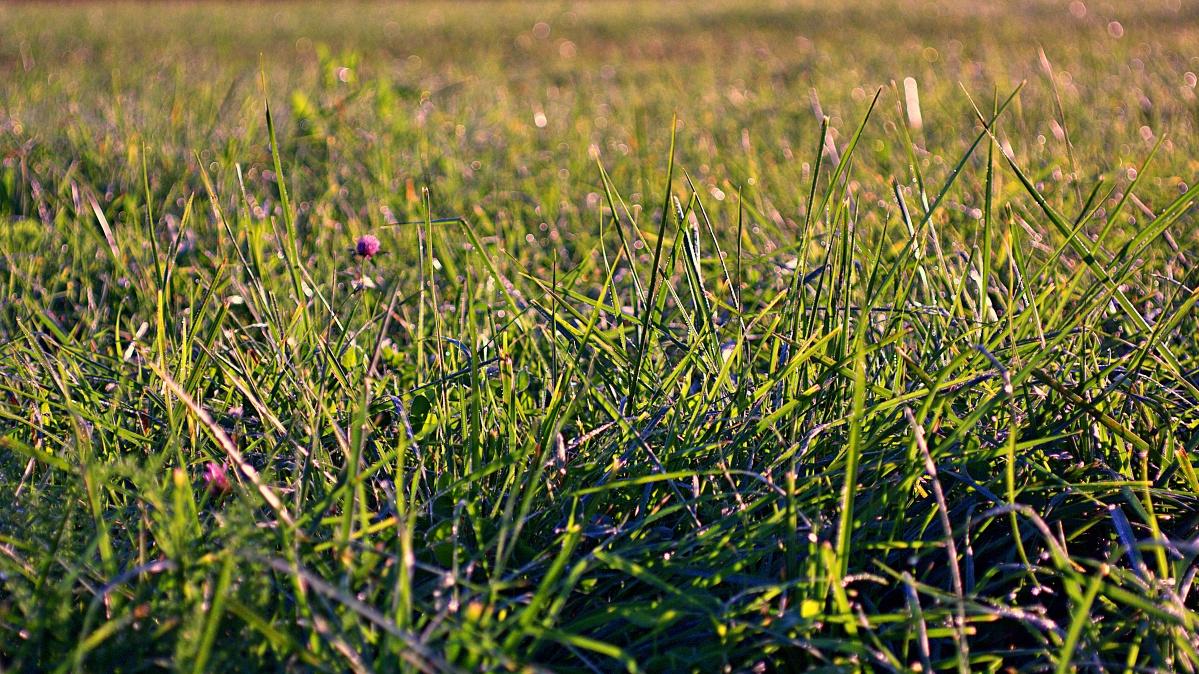 #190 Neonon f2.8 50mm – Profane Wiese am Morgen