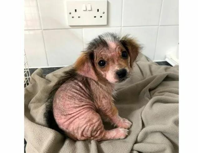 Больную собачку привезли для того, чтобы усыпить, но волонтёр забрала её к себе. Какой она стала через год (+фото)