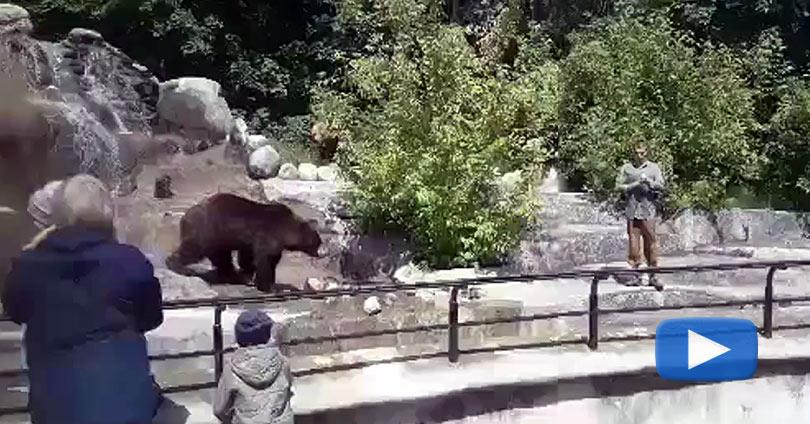 Μεθυσμένος-Πολωνός-Προσπαθεί-να-Πνίξει-Αρκούδα-σε-Ζωολογικό-Κήπο