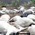 Heavy Thunder strikes over 12 cows dead in Delta community