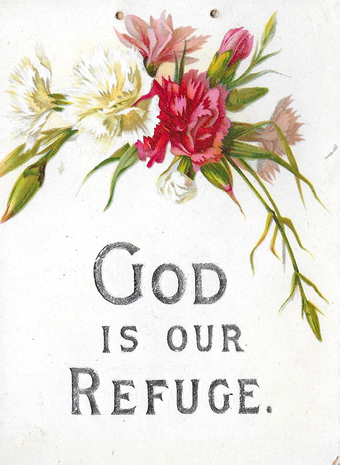antique images  free printable carnation primrose flower
