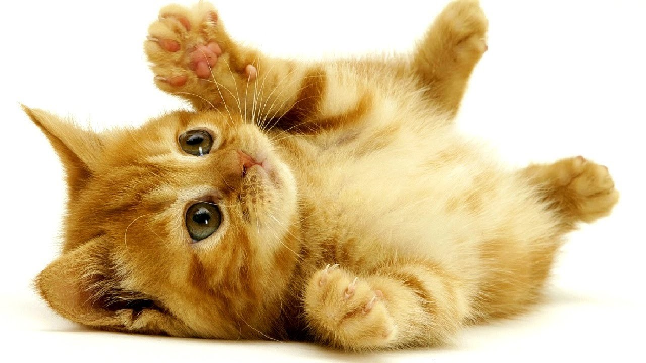 Ziemlich Süße Malvorlagen Von Kätzchen Bilder - Malvorlagen Von ...