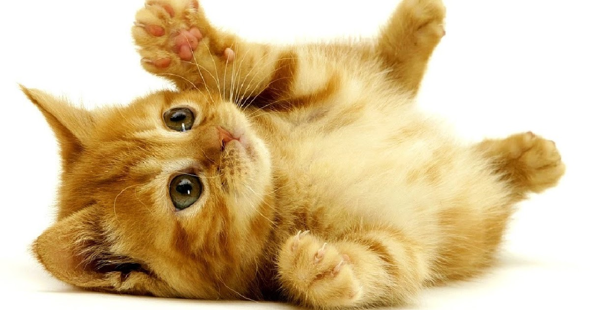 Beste Süße Katzenbilder Süße Katzen Bilder