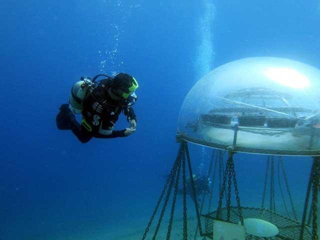 kubah transparan di bawah laut