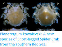 https://sciencythoughts.blogspot.com/2019/10/planotergum-kowalevski-new-species-of.html