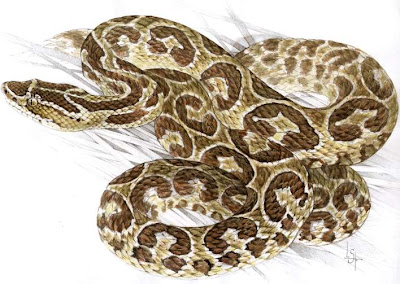 Yarará Bothrops alternatus