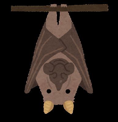 ウマヅラコウモリのイラスト