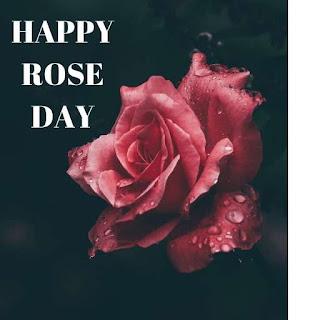 Rose Day Hd Photo