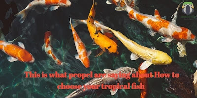This is what People Are Saying About How To Choose Your Tropical Fish