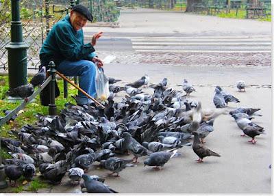 palomas capaces de reconocer caras humanas