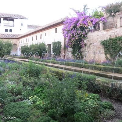 bougainvillea in Spain