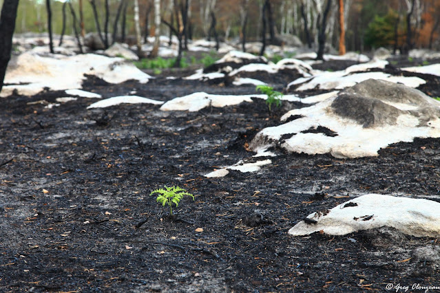 Les incendies sont une des conséquences du tourisme de masse.