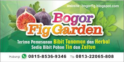 www.bogorfig.blogspot.com