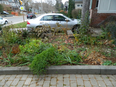 Bedford Park Toronto Fall Front Yard Cleanup Before by Paul Jung Gardening Services Inc.--a Toronto Organic Gardening Company