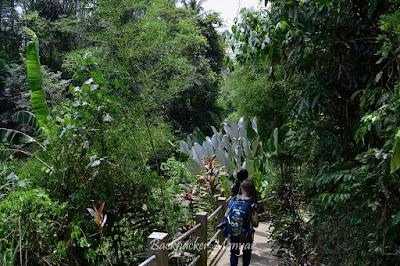 Jalan bertangga menuju Air Terjun Tibumana yang asri