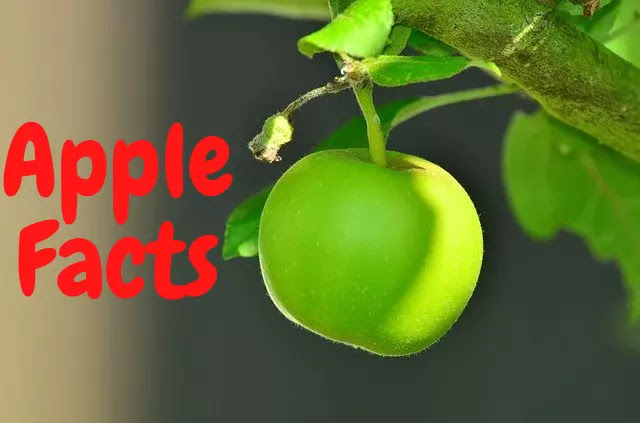100 Facts About Apple In Hindi
