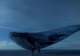 Mavi Balina Hakkında Bilinmeyenler
