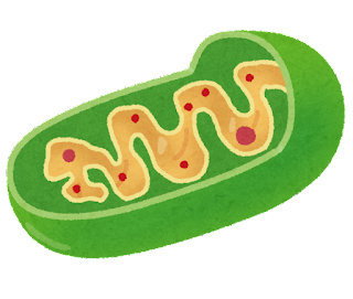 Functions of Mitochondria