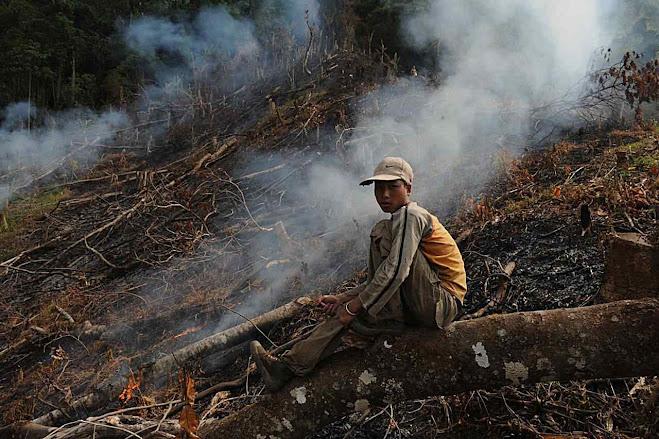 Bancos estatais chineses incitam o desmatamento com dinheiro. Foto Jianchu Xu, World Agroforestry Centre
