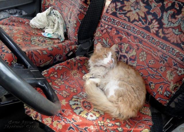 Кот рулевой