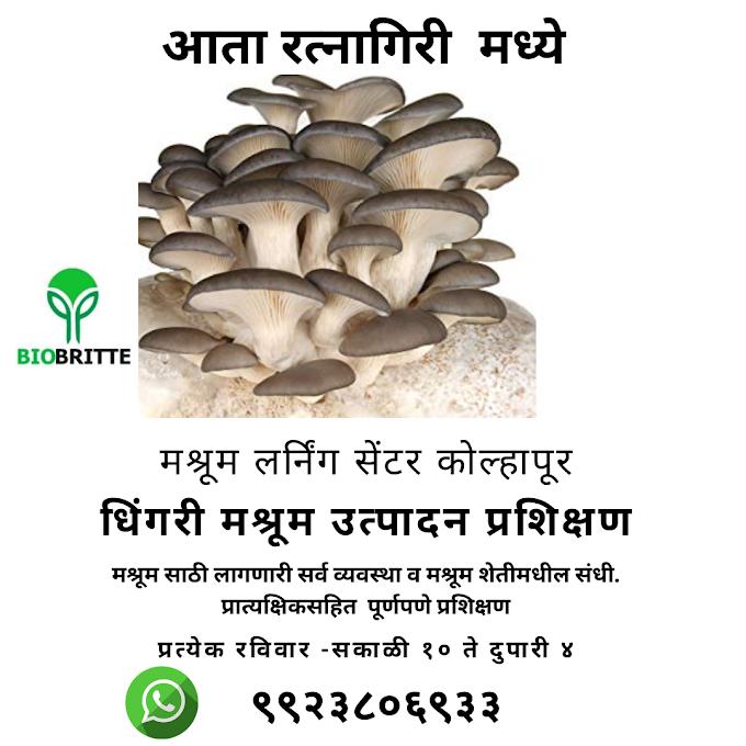 Mushroom Training in Ratnagiri