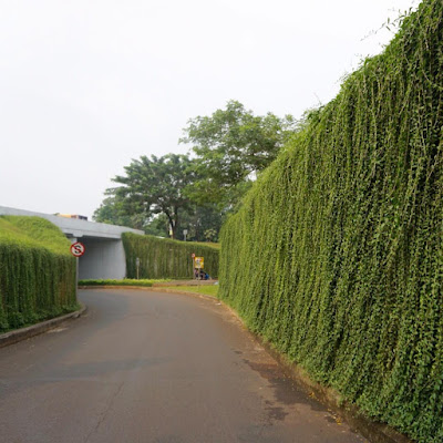 taman vertikal Green facade