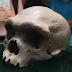 La increíble historia del cráneo de Harbin
