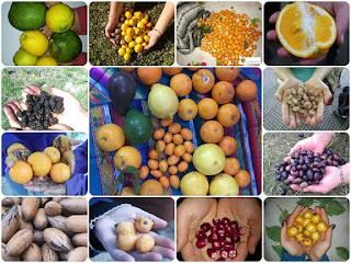 ¿Cómo comer frutas gratis en plena ciudad?