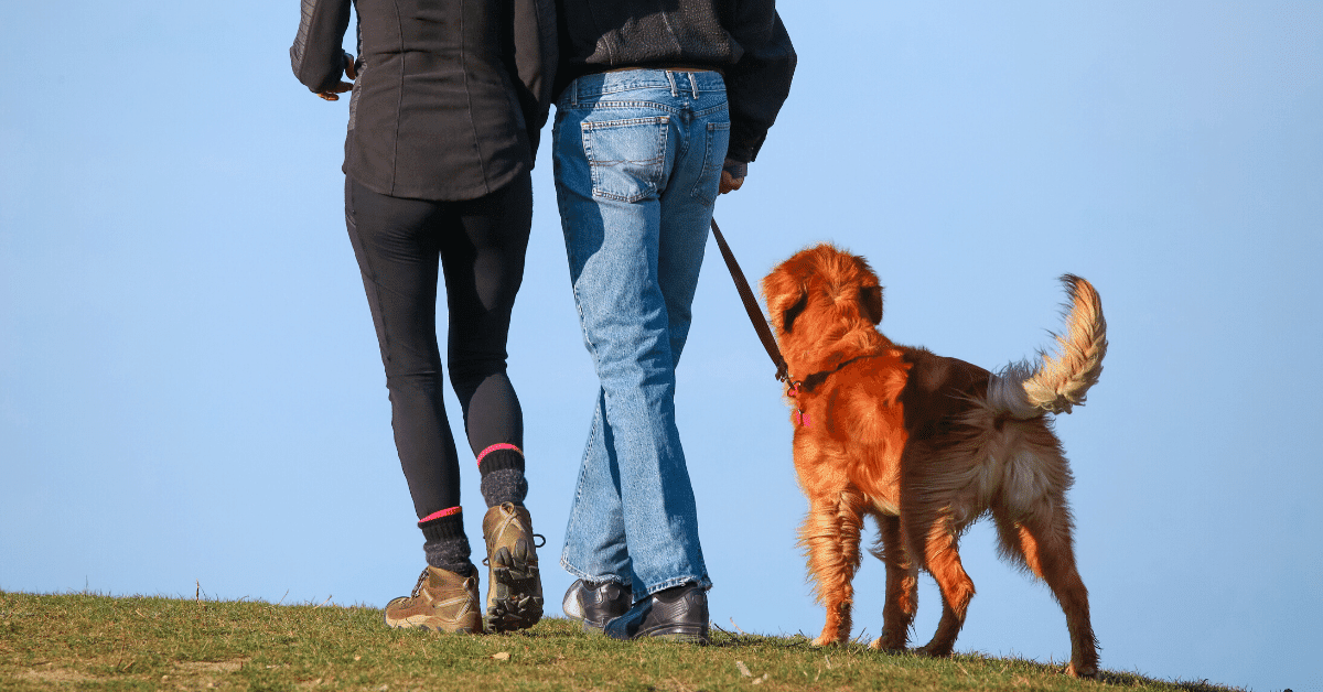 two people walking outside with a dog