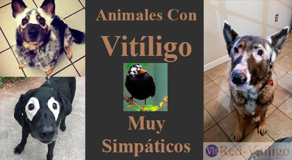 Animales Con Vitiligo Muy Simpáticos.