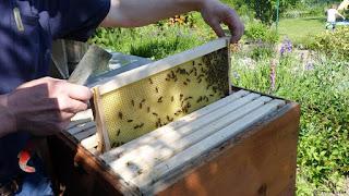Alemania y el auge de la apicultura urbana 5
