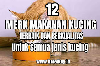 merk makanan kucing berkualitas dan bergizi lengkap angggora persia bolt kampung
