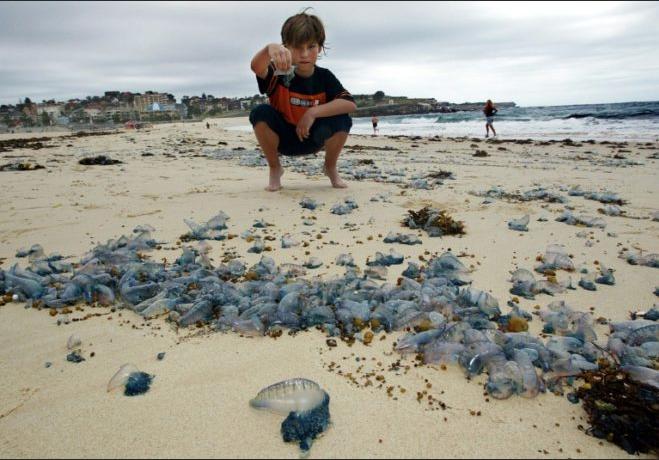 Thousands stung by a jellyfish invasion in Queensland Australia Screenshot%2B2019-01-07%2Bat%2B12.06.59