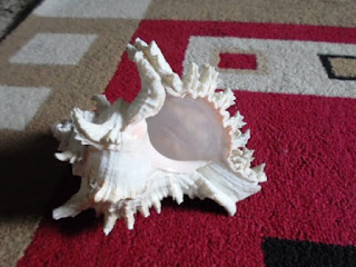 The Hindu Devotional Conch Shell, the Annapurna Shankha