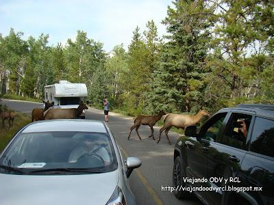 Rocosas Canadienses. Jasper Canada. http://viajandoodvyrcl.blogspot.mx