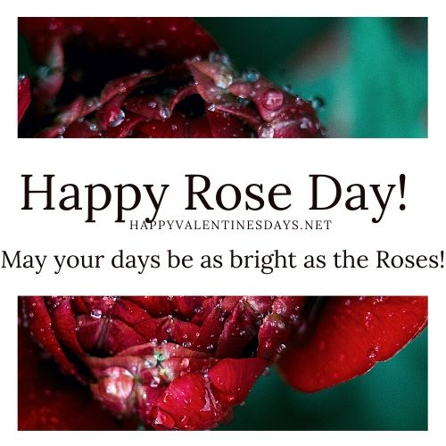 rose-day-images-2020
