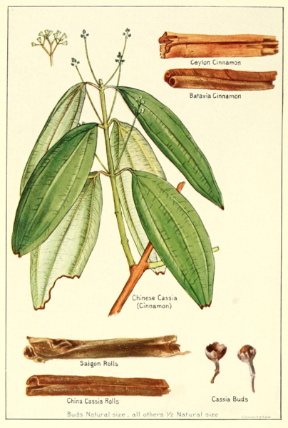 Cinnamon and Cassia according to geographical locations, public domain image