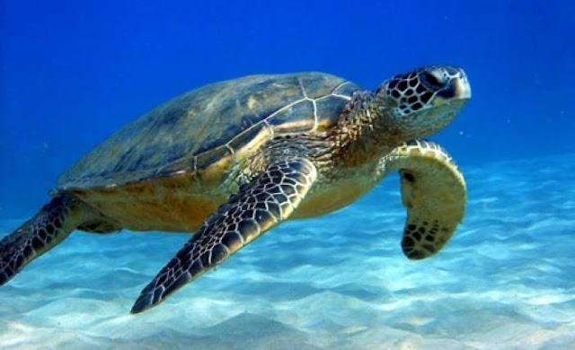 Συμμαχία ευρωπαϊκών χωρών για την προστασία της βιοποικιλότητας στη Μεσόγειο (βίντεο)