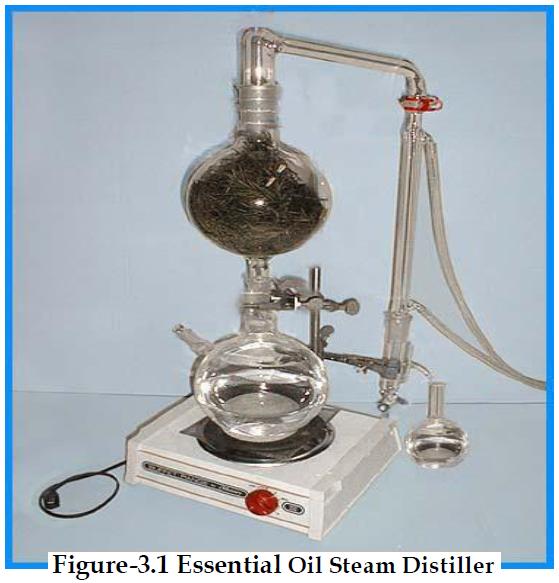 how to obtain Essential oil by steam distillation ?